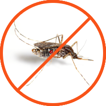 Mosquitoes pest control