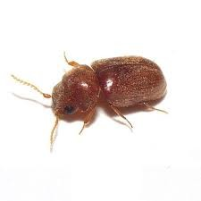 Beetles Moth Spiders Insect Pest Control service London