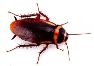 cockroach pest control London